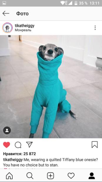 Фото собачки в инстаграм